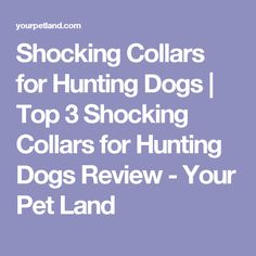 Shocking Collars for Hunting Dogs Best Dog Training, Training Collar, Asdf, Best Love Quotes, Hunting Dogs, Best Dogs, Your Pet, Stiletto Heels, Collars