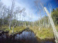 Eerie cedar tree landscape at Killarney Lake - Bowen Island