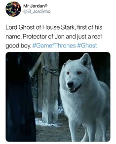 game of thrones The goodest boy of them all. Ghost Game of Thrones. Winter Is Here, Winter Is Coming, Game Of Thrones Meme, Game Of Thrones Ghost, Game Of Thrones Theories, Game Of Thrones Books, Jon Schnee, Ghost Games, Got Memes