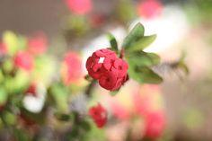 "Saatchi Art Artist Mahsa Watercolor; Photography, ""Red flower"" #art"