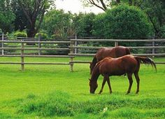 Great article on what to plant for the Perfect Horse pasture.
