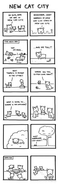 Fordi vi alle gerne kat NIP.