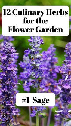 Garden Plants, Herb Gardening, Indoor Gardening, Garden Inspiration, Garden Ideas, Growing Herbs, Flower Farm, Medicinal Herbs, Outdoor Landscaping