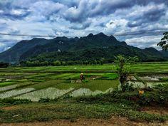 Rice paddies in Pu Luong