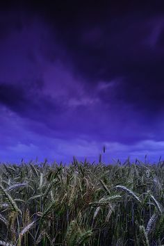 Silence by Buszujacy-w-zbozu Animal Protection, Purple Sky, God Bless America, Northern Lights, Tours, Grasses, Places, Nature, Appreciation