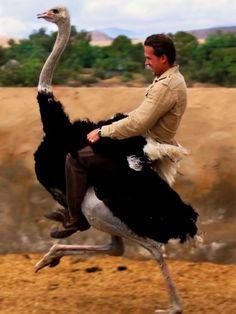Man rides ostrich?  Best postcard of the week!