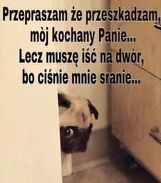 Funny Mems, Haha, Dog Cat, Memes, Animals, Humor, Funny Memes, Animales, Animaux