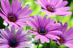 Resultado de imagem para imagens para fazer poster de flores
