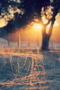 Autumn morning~