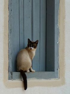 """A cat is always on the wrong side of the door."" --Anonymous"