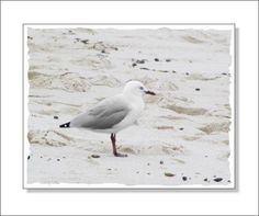 Beach seagull print by NewCreatioNZ on Etsy, $20.00