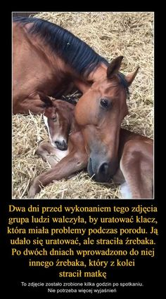 Happy Animals, Nature Animals, Animals And Pets, Funny Animals, Cute Animals, Horse Photos, Warrior Cats, Horse Riding, Best Memes