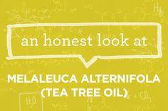 What is Melaleuca Alternifola (Tea Tree Oil)? | via The Honest Company Blog
