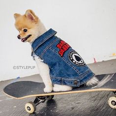 LORD OF DOGTOWN 🤘🏻Blonde skater boy @raffytales is single ladies. 💙 Any takers? . 📸 @stylepup . . Patched up Pethaus Denim Vest 👆🏻 link in profile . . #skaterguy #dogtown #patchedup #battlejacket #kutte #patches #pomeranian #patches #blacksabbath #motorhead #pethaus #metaldog #skaterdog #denimdogvest #denim #denimfordogs #pethauspack #denimdog #hipsterdog #dogstyle #madeinmelbourne #dogsofetsy #dogfashion