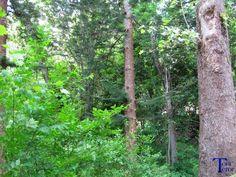 Por los árboles | El reflejo de mi mirada, + fotos.