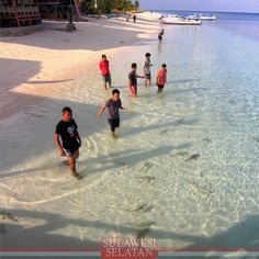 Playing with baby sharks in Sulawesi
