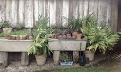 Create a lovely garden shed with a table and a bunch of plants in terracotta pots #Glenmore House