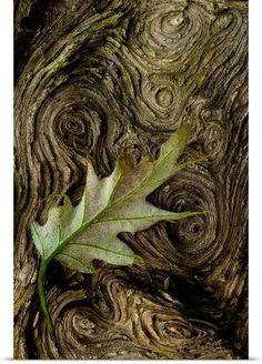THE FAIRY SWAN - (via Pinterest: Discover and save creative ideas)