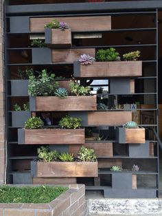 Steel & wood succulent wall