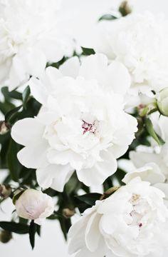 Peonias blancas ...