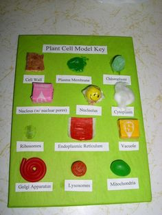 edible plant cell model | Love this project? Add it to your favorites!