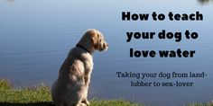 Not all dogs love water. Luckily, using positive reinforcement training, we can teach your water-shy pooch that water is fun. Dog Training Books, Agility Training For Dogs, Dog Agility, Dog Training Tips, Dog Tub, Mites On Dogs, Hypoallergenic Dog Food, Dog Cleaning, Cleaning Tips
