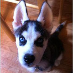Blitz Puppy :)