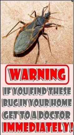 WARNING If You Find These In Your Home Get To a Doctor IMMEDIATELY!