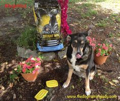 Amazingly easy way to engage our senior dog #BrightMind #ad