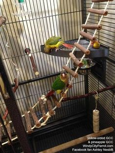 Corner Shelf Perch by Prevue Pet - Great for Handicap Birds & Parrots