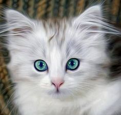 Beautiful   LIKE Meow Aum for more Cat Pictures - http://meowaum.com/
