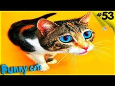 Смешные коты Приколы Подборка Лучшее! Funny Cats compilation