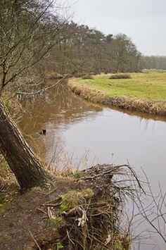Drentse Aa rond Zeegse en Schipborg (7km) http://wandelenrondroden.nl/middellange-routes-6-10km/wandelroutes/6-10km/drentse-aa-rond-zeegse-schipborg-7km  Dezewandeling bij deDrentse Aavan 7 km brengt u in een bijzonder fraai deel van één van Nederlands nieuwste Nationale Parken: het stroomdalgebied van het riviertje de Drentse Aa. Grote delen van dit riviertje zijn bewaard gebleven in de oorspronkelijke staat. U kunt de grote lussen zien waarmee de Aa door het natte stroomdalgebied…
