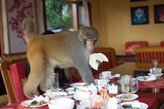 Humans of New York:  We were eating lunch with the door open, and a monkey started to peek through the door.'Isn't that cute?' we thought. 'Hello monkey,' we said. Then the situation quickly deteriorated. (Dharamshala, India)