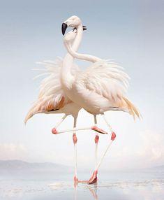 Animal Kingdom – Entre photographie animalière et créations