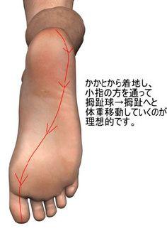 O脚だけれど、しゃがむとX脚になるという人は少なくありません。そういう人の多くは母趾球に力を入れて歩いています。なので、母趾球や母趾の内側にタコができています。一般的に「母趾球に力を入れて歩く」と言われていますが、踵からすぐに拇趾球に体重移動をするのは大きな間違えです。 歩行時の体重移動はかかとから着地をしたら小指側から拇趾球→拇趾へと移動していくのが良いです。