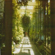 Winter Garden, Conservatory, Botanical Gardens, Planets, Green, Nature, Art, Art Background, Naturaleza