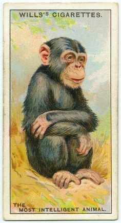 """Wills's Cigarettes """"Do You know"""" cards 1922"""