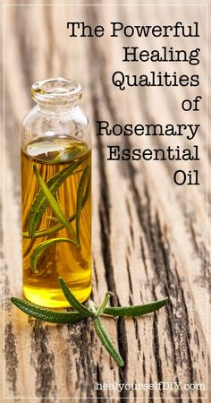 The Powerful Healing Qualities of Rosemary Essential Oil | http://www.healyourselfDIY.com