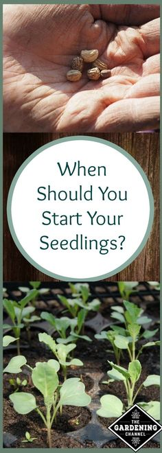 When to start seedlings depends on what type of plant you are trying to grow.  Learn more about when to start your seeds.