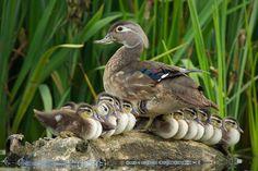 Bird Photography - 25 Brilliant Examples - AntsMagazine.Com