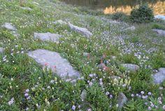 #stones #path #clover #grass