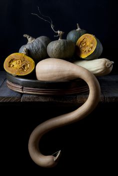 studio shot of different kinds of pumpkins on dark background