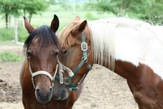 Horse on the right looks like my old horse Leo