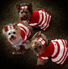 Christmas doggies in Dresses ♥•♥•♥