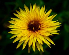 Yellow Star by Susan Chan on 500px