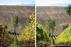 Entreprise. Domaine de Lastronques. Lézat sur Lèze, Ariege 09. www.elenajolandphotos.com