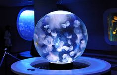 Jellyfish are delicate and sensitive best kept in aquariums that do not have corners so how about this one? no corners...no worries.
