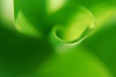 Green Fantasy  by Tatsiana Niaronava on 500px