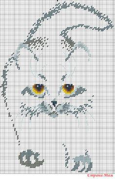 15814301_85213.jpg (450×700)